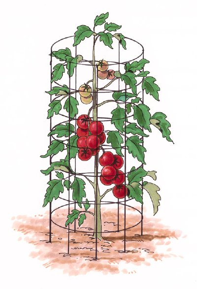 The Case of the Missing Tomato Cages